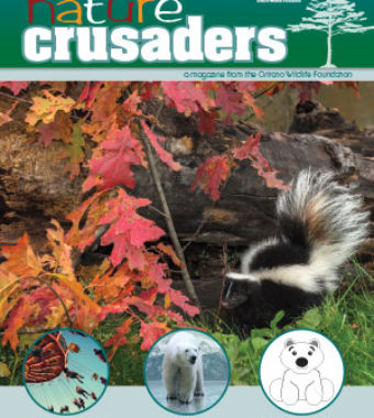 naturecrusaders_issue5-coverthumbnail