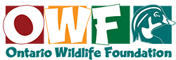 Ontario Wildlife Foundation Logo