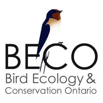BECO - Bird Ecology and Conservation Ontario