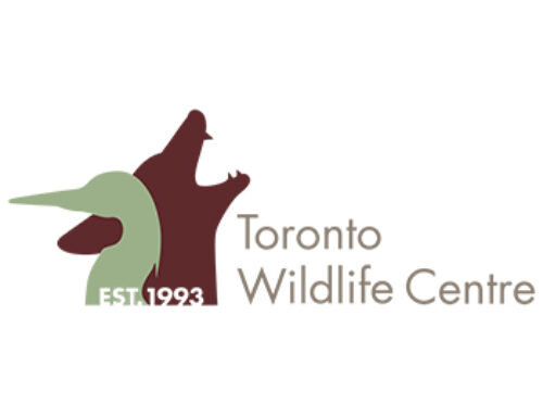 Toronto Wildlife Centre